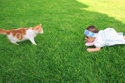 Infants can develop cat allergies.