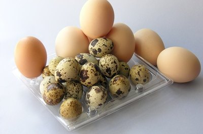 Eggs can be a healthy part of a dog's diet.