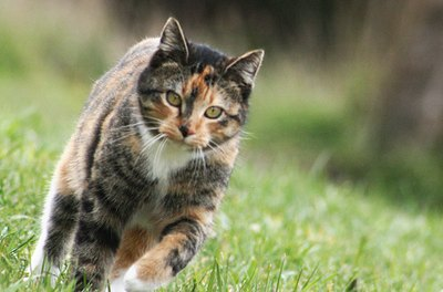 Cat hip problems can be related to serious injury, genetics, age and obesity.