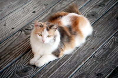A sweet stray cat may just show up on your deck.