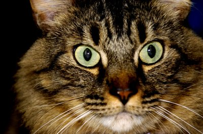A stressed-out kitty can develop a variety of health and behavioral problems.