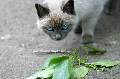 Many plants have scents cats hate.