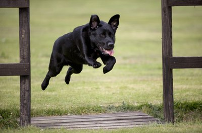Dogs are avid jumpers, but fencing keeps them safe.