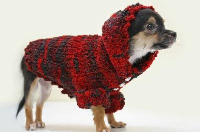 Get your pup to wear his sweater and he'll be the center of attention during your walks.