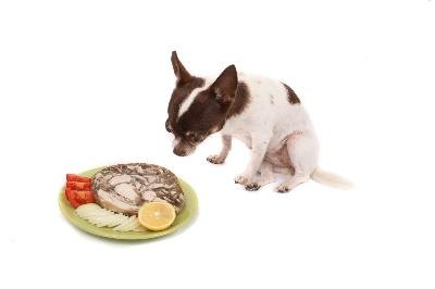 Feed your Chihuahua a balanced diet -- but one that is formulated for her.