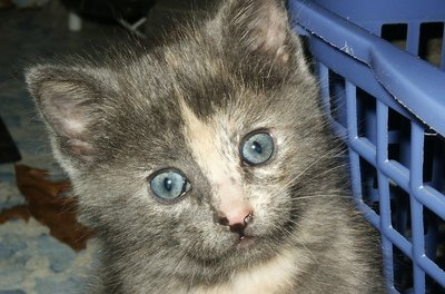 Give a stray kitten a home, and you just may be saving a life.