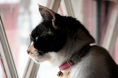 Indoor cats live 10 times longer on the average than outdoor cats, according to Dr. Steven Fairchild.