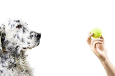 Teaching your dog to hold objects in his mouth is possible with patience and consistency.