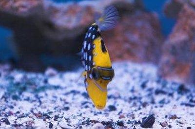 How Many Fish Go in a 30-Gallon Marine Aquarium? - Pets