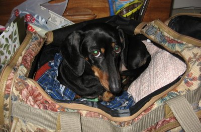 Airports maintain a pet specific area for dogs before and after flights.