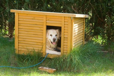 House-training requires planning, patience and persistence, regardless of the age of the dog.
