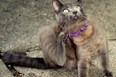 Scratching and sneezing are signs that your cat has an allergy.