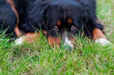 Dogs left to their own devices in a yard can become lonely and bored and may develop behavioral problems.