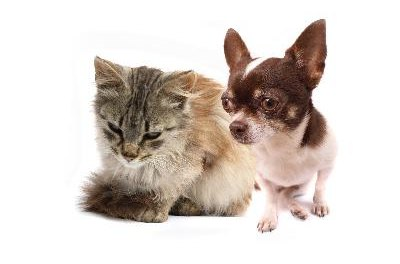 Cats and dogs can both catch human colds.