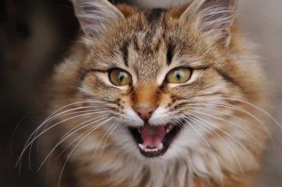 Feline begging is a bad habit that can be hard to break.