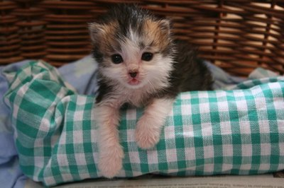 Newborn kittens have more energy and grow rapidly compared to human babies.