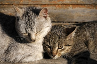 Cats have diverse temperaments, but they're generally calm or skittish.