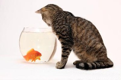 A swimming fish is just too attractive for your cat to pass up.