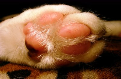 Cat toenail infections can be painful, but they're rarely life-threatening.