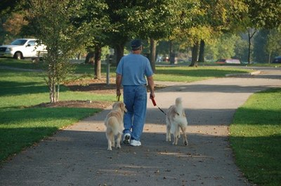 Do not allow your dogs to take you for a walk.
