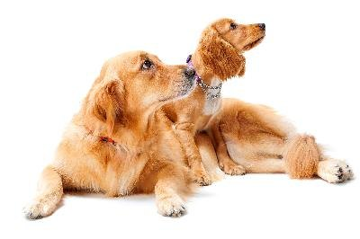 Though it varies by breed, the average lifespan of a dog is 12 years.