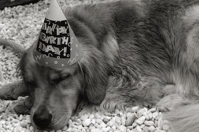 Celebrate your dog's birthday with fun and tasty things.