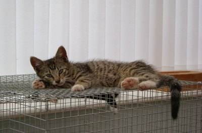 If your cat gets sick, you may need to keep him in a kennel so he gets enough rest.