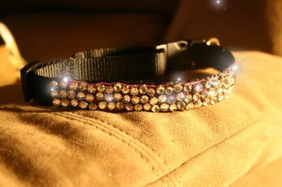 Save the sparkly collars for special occasions.