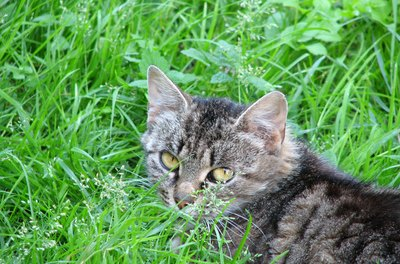 The real reason cats chew grass is largely unknown.