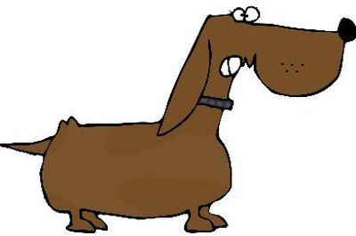 Male dachshunds are calmer when their sexual abilities are eliminated.