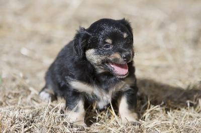 Puppies that play outside may be at risk of contracting parvovirus if they are not vaccinated.