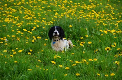 There are a number of heartfelt ways to celebrate a dog's memory.
