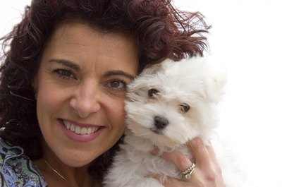 Bichon Poodles have shown to be fluffy, clever and easily trained.