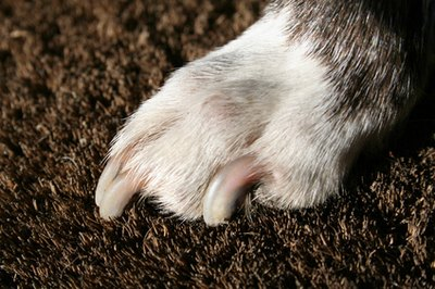 How To Trim Overgrown Dog Nails Pets