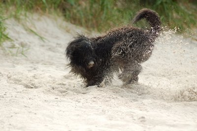 Dogs simply love to dig.