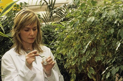 Botanists study plants of all types, including algae and fungi.