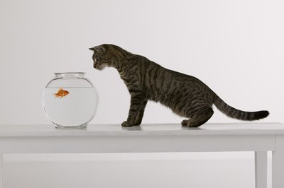 Goldfish can remember things for at least a month.