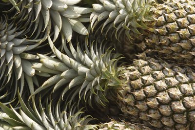 Pineapple contains bromelain, which digests proteins.