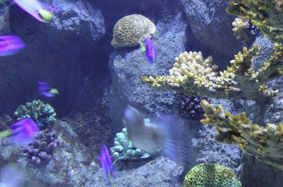 When done well, a false back can make your aquarium look like a tropical reef.