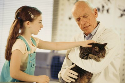 Ultrasound of a cat's body can help a veterinarian pinpoint where to take a biopsy.