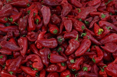 Paprika is ground from a variety of dried red peppers.