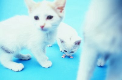 Only kittens with pink or light blue eyes are albinos.