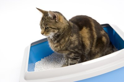 Don't disturb a urinating cat, it might keep him from using the box again.