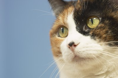 Figure out what dietary culprit is causing your kitty's tummy distress.