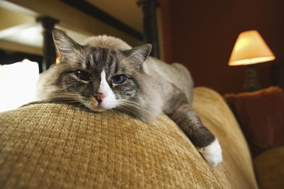 Weight changes are not unusual in aging felines.