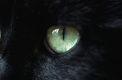 The cat's pupil contracts in bright environments.