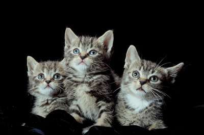 These three little kittens have lost their alopecia.