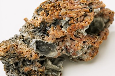 Live rock helps control nitrate and other ammonia compounds.