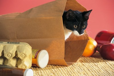 Kittens hide everywhere -- even inside bags.