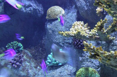 Reef aquariums need special attention to water chemistry.